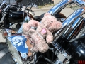 Girls_on_Bikes_for_a_good_cause_08